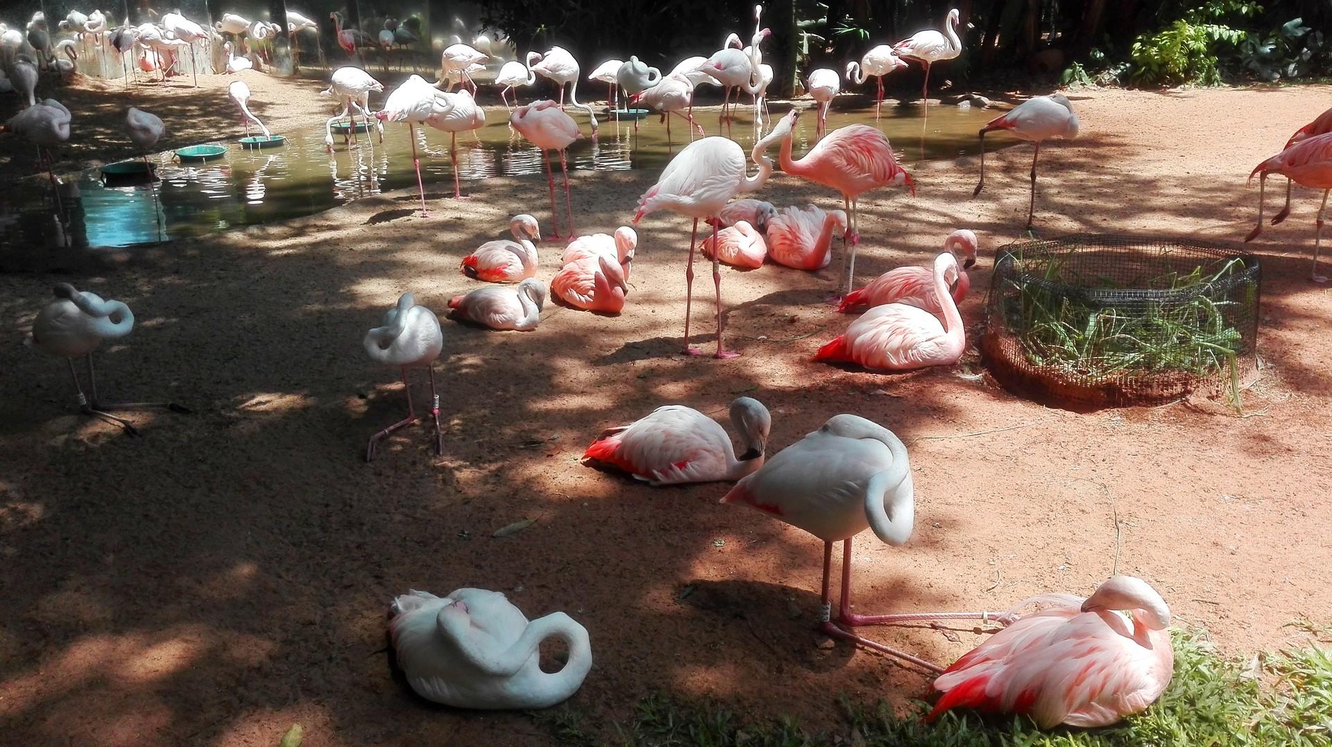 Flamingów naprawdę dużo - najśmieszniejsze są ich sprzeczki :)