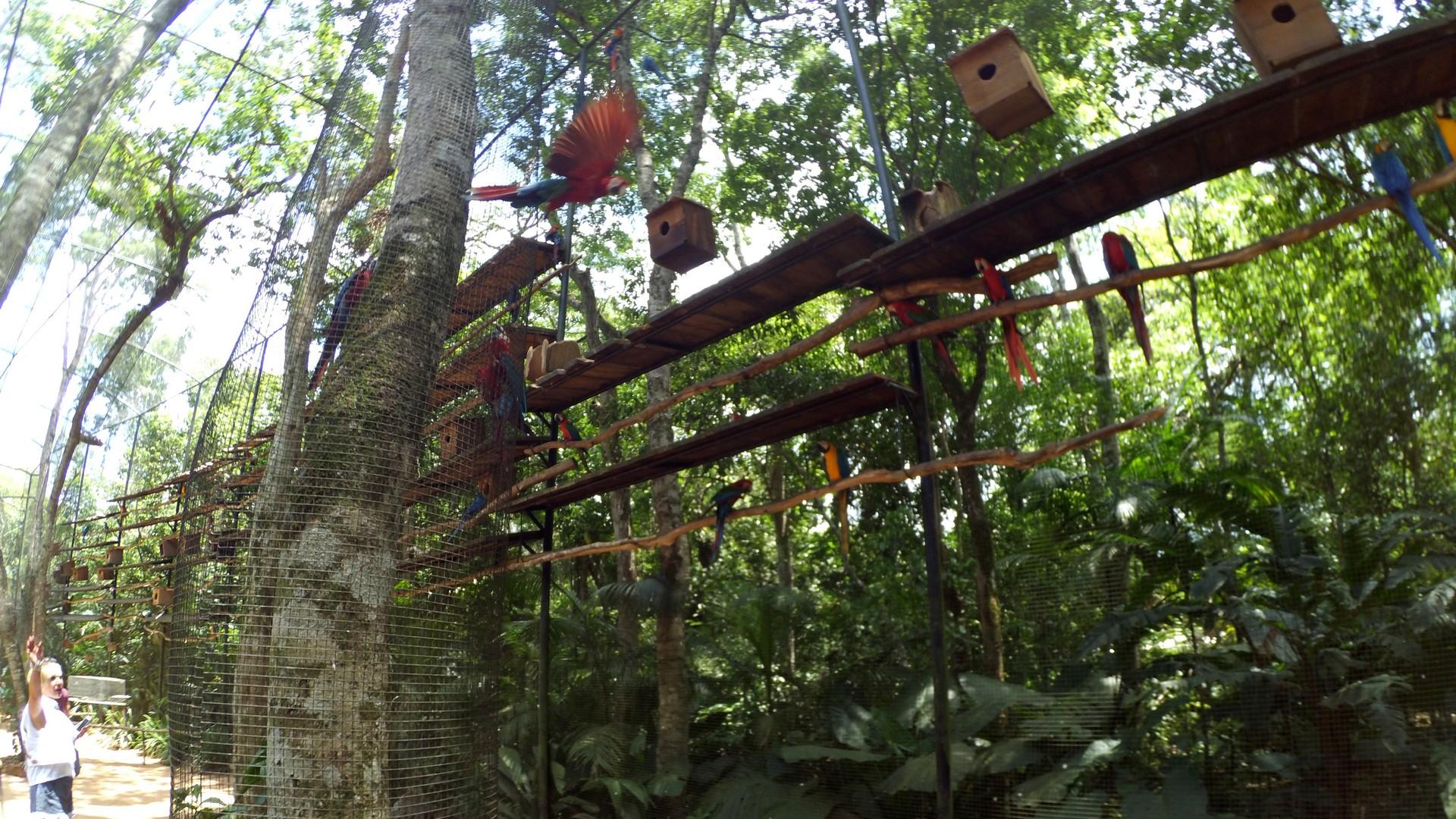 to tutaj papuzie dywizjony atakują turystów