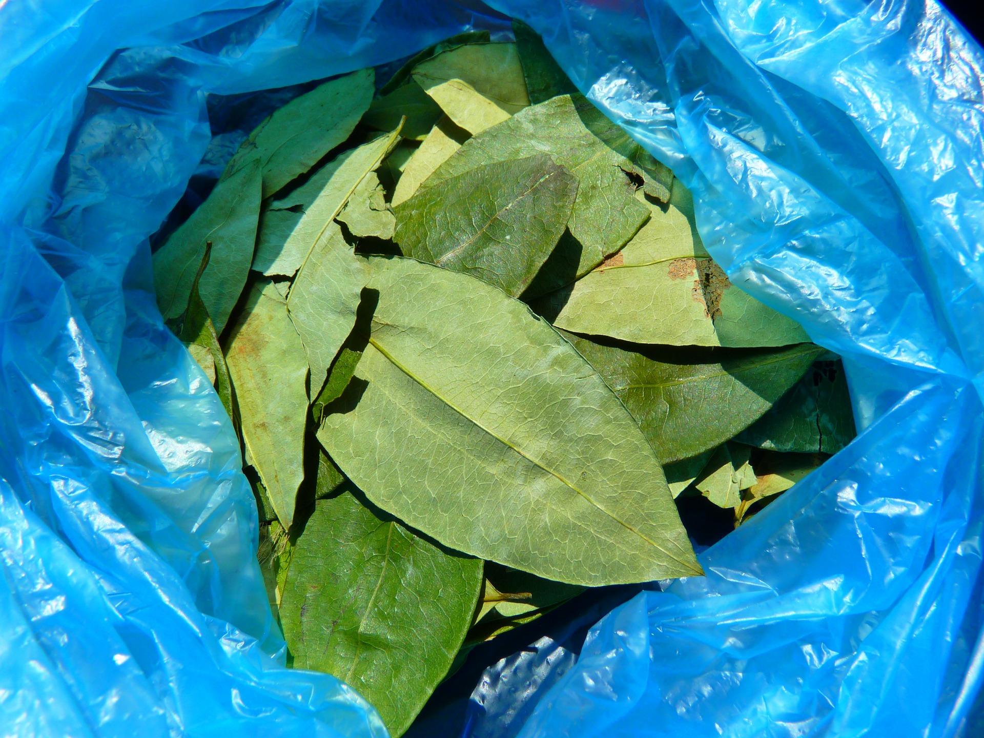 tak wyglądają suszone liście koki