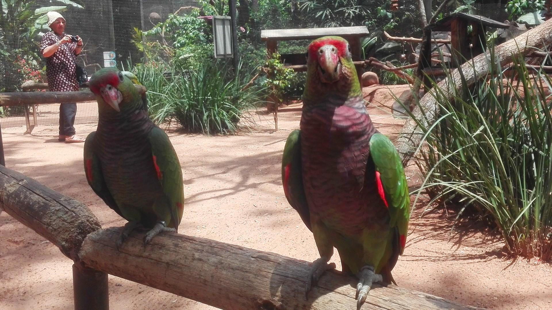 Papugi i tukany zdecydowanie są tam najbardziej towarzyskie