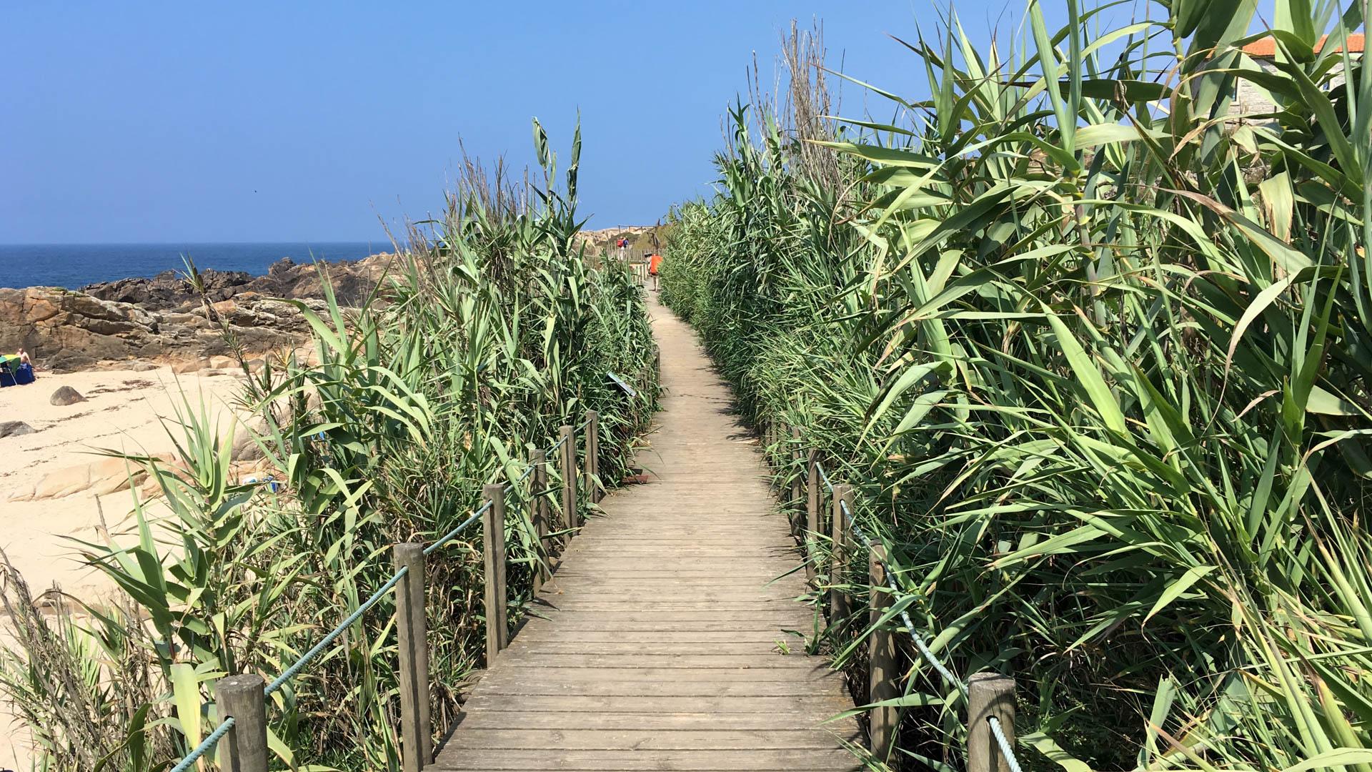 Portugalskie Camino Costa często biegnie tuż przy oceanie