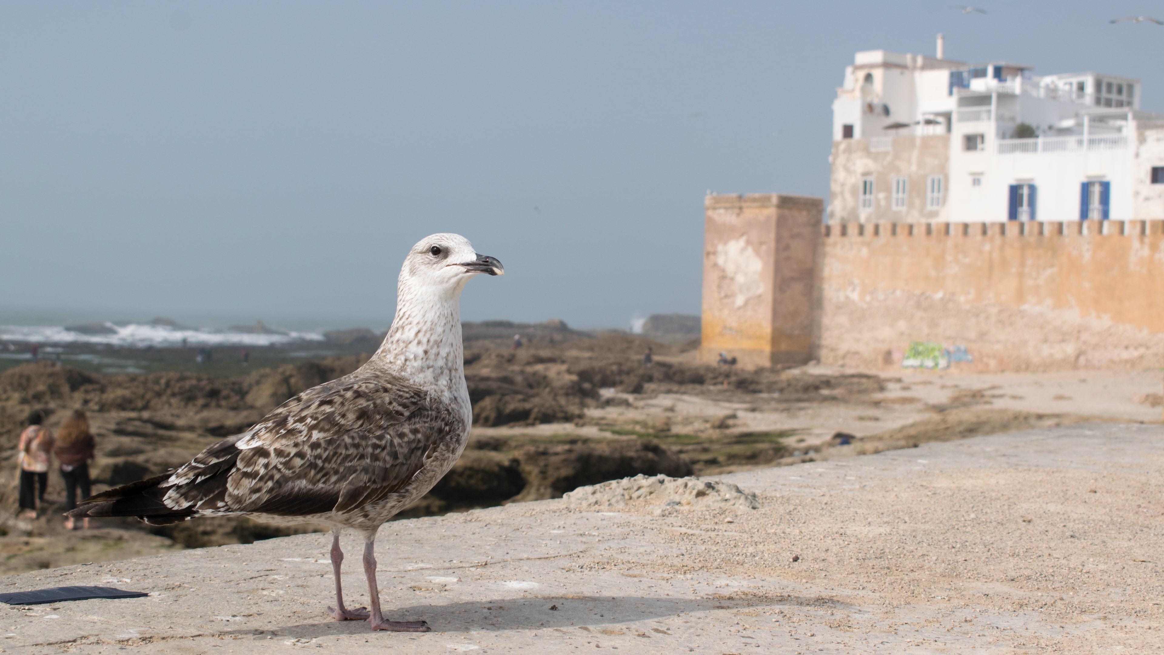 Mury w Essaouirze