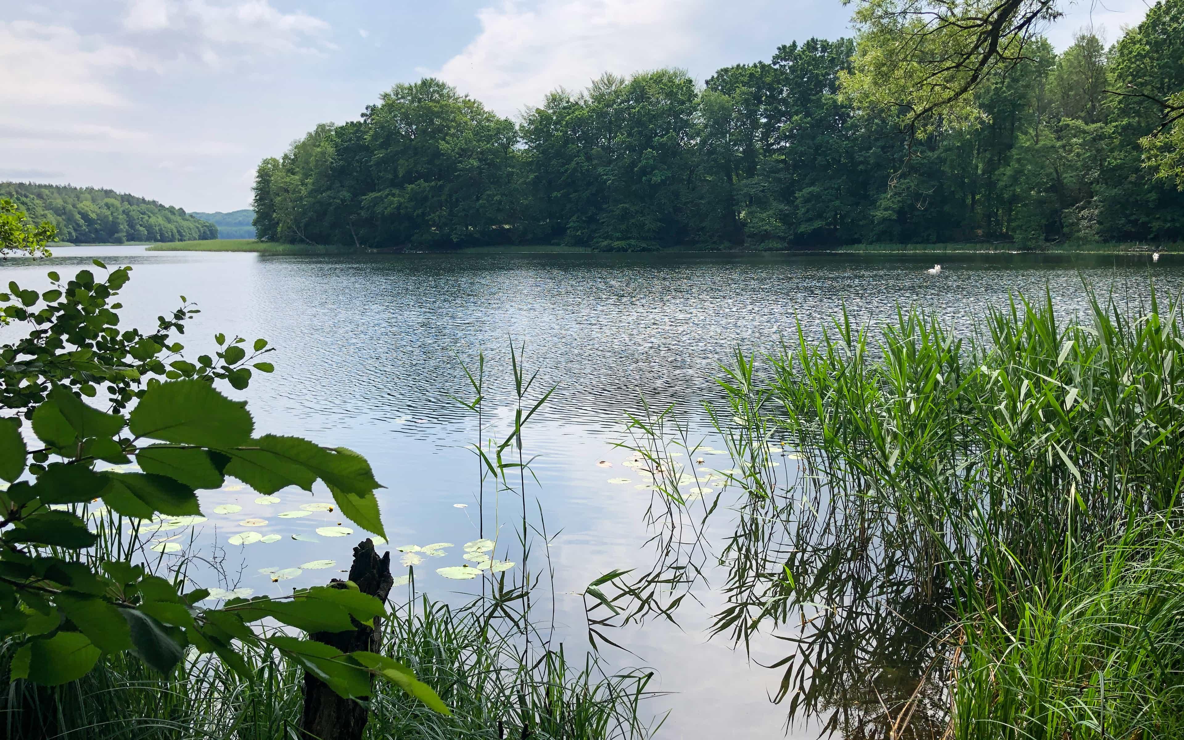 Jezioro Dębno w Drawskim Parku Krajobrazowym